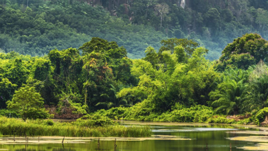 Photo of Khao Yai National Park – Waterfalls to Camping in Thailand
